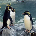 rumbliegeos's Avatar